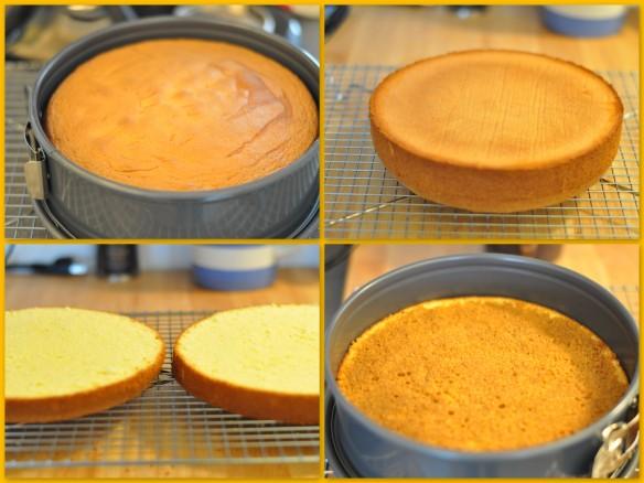 Sponge cake for Tiramisu